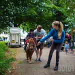 Wandelbos festival-9775